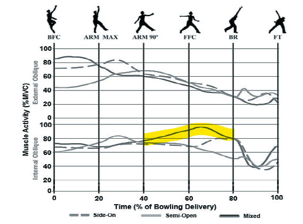 Muscle Activity During Phases Bowling